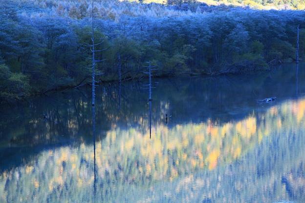 大正池 紅葉と立ち枯れの木