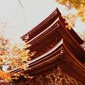 金剛輪寺(7) 三重の塔