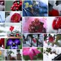 わが家の12月の花
