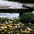 Photos: 落ち葉 曲水と雁行橋