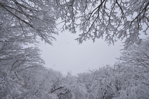 Snowy Sky