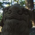 Photos: 新溝神社の狛犬たち