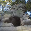 新溝神社の狛犬たち