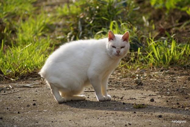Photos: 歌舞伎猫