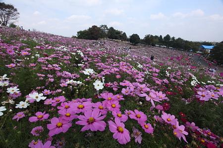 昭和記念公園(1)