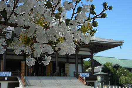 西新井大師の夏
