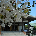 Photos: 西新井大師の夏
