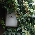 Photos: 神楽坂倶楽部16 ジャングル