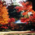 秋の深まり
