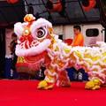 Photos: 可愛く歩き回って。。中国獅子舞 横浜中華街2月21日