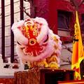 Photos: 最近中国獅子舞は。。光物が。。LED化で。。横浜中華街 2月21日