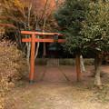 Photos: 2014紅葉の鳥見山公園・1