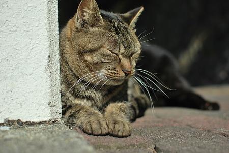 童謡の園・猫7