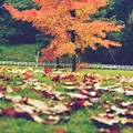 When autumn leaves start to fall