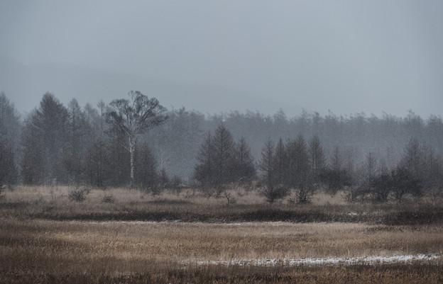 写真: 雪にかすむ