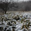 写真: 雪積り。。。