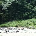 写真: 川の写真