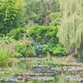 Photos: モネの庭 睡蓮・緑のハーモニー(色鉛筆)
