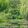 Photos: モネの庭 睡蓮・緑のハーモニー(パステル画)