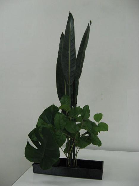 ストレチアの葉、モンステラ、レモンリーフ