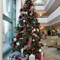 Photos: ChristmasTree@Hospital-Dec23-2014-1