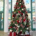 Photos: ChristmasTree@Hospital-Dec23-2014