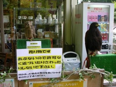 フクロウと鷹