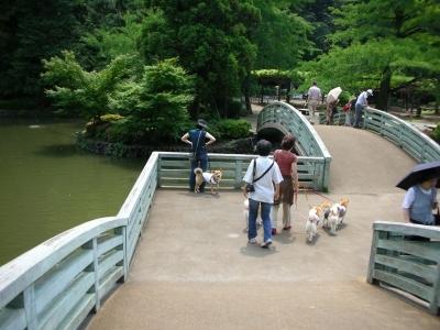 ニセ錦帯橋