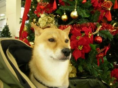 もうクリスマス?