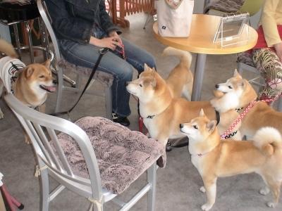 秋田犬の店