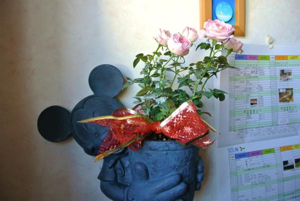 お友達にもらった花を飾る