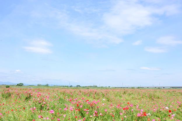<荒川左岸*空の景色(2)>