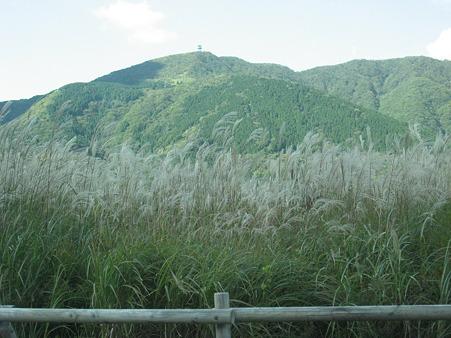 仙石原すすき野