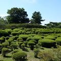 Photos: 小室山公園のあふれる緑