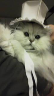 モコさんに帽子(*・д・*)