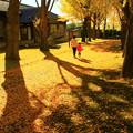 歴史館の銀杏並木
