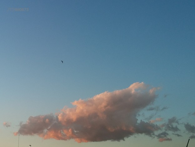 Photos: ピンク色に染まる雲と空を舞う鳥
