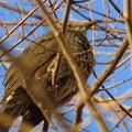 Photos: 枝の中に身をひそめる野鳥