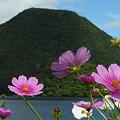 Photos: 榛名富士とコスモス2