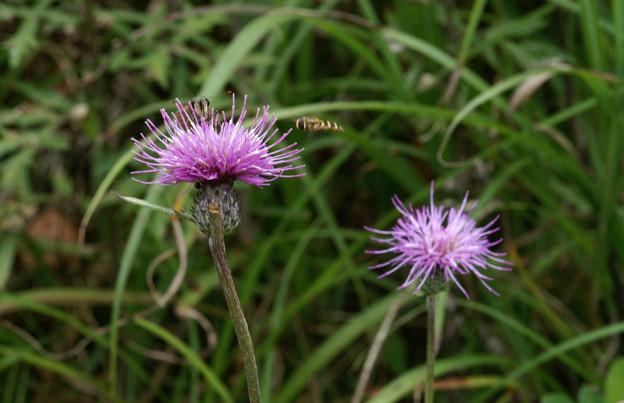 Photos: 蛾と蜂の争い