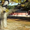 Photos: 樹齢300年