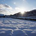 Photos: 冬の田んぼ