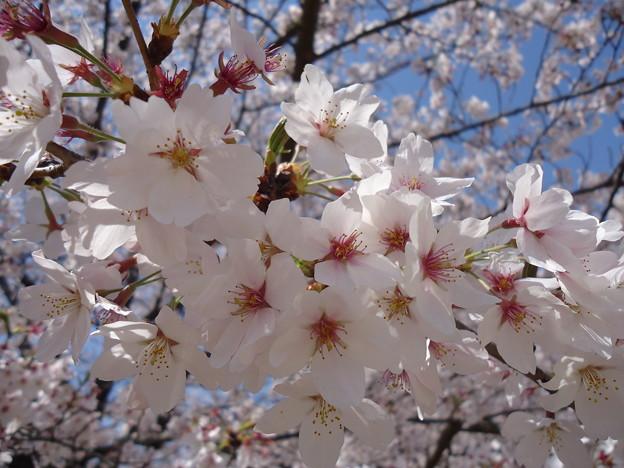 春たけなわ~♪ - 写真共有サイト...
