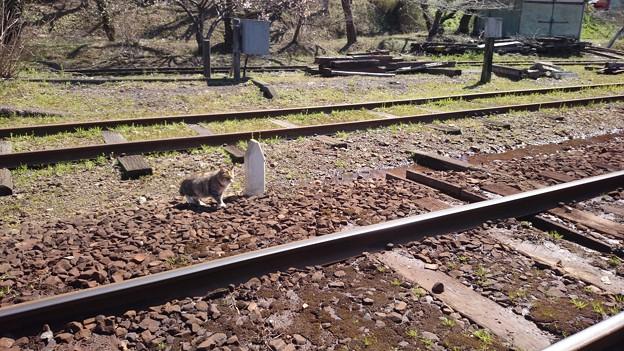 月崎駅にいたネコ