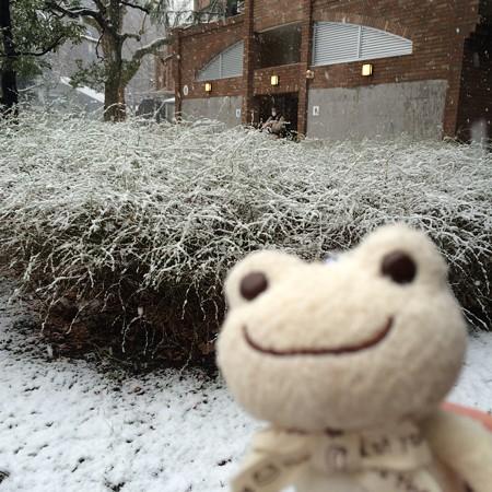 雪の花が咲いたユキヤナギ